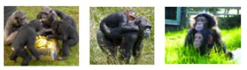 Monkey world coach tour