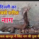 दिल्ली में जिंदा नाग की पूजा शुरू