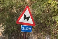 Careful batterflies!