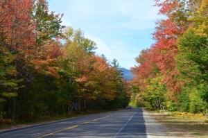 Trees along The Kancamagus Highway