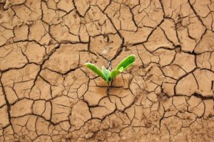 Green sprout in parched earth