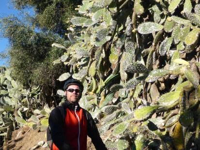 puerto-serrano-wall-of-cactuses