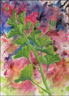 Geranium Leaves 2, 2008, water color paints and pencils on high Gsm Paper, By Aaron O'Brien. For Sale