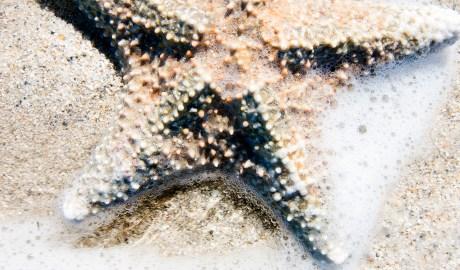 South Beach Starfish