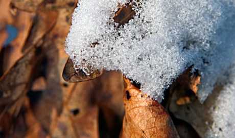 Wintered Turkey Leaf