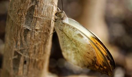 Butterfly on Bark