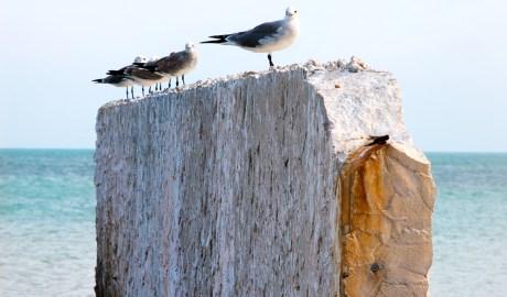 A Breaker for the Birds