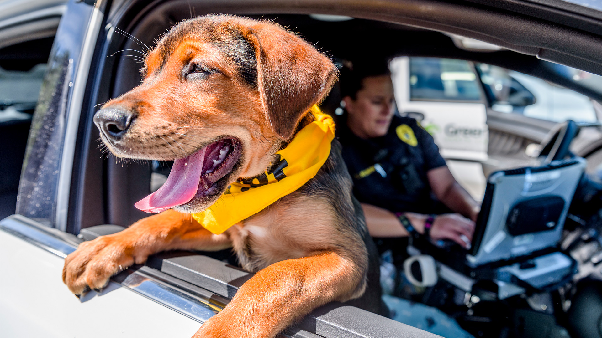 K9 For A Day