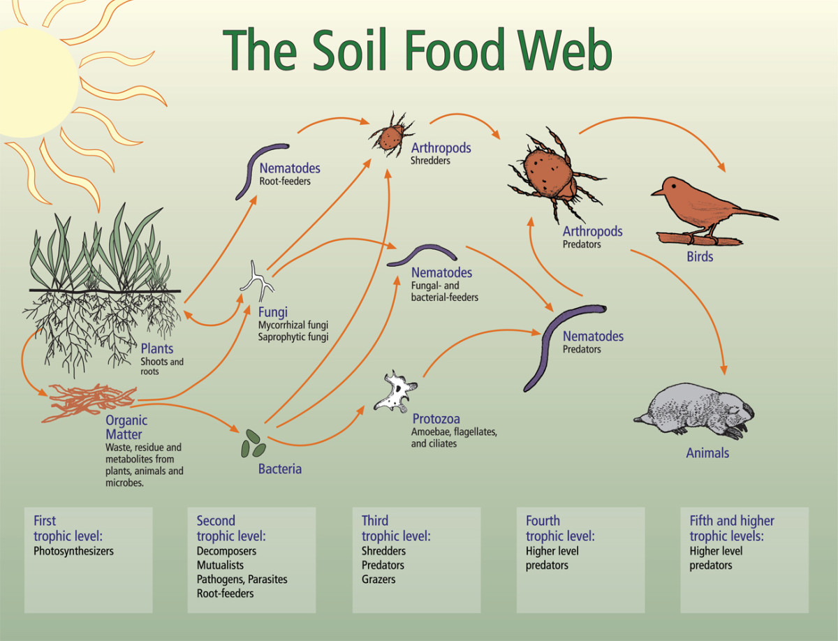 how to create a food web diagram golf cart accidents build soil like nature does science basics