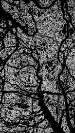 trees_edges_2