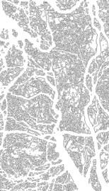 trees_edges_trace_contour