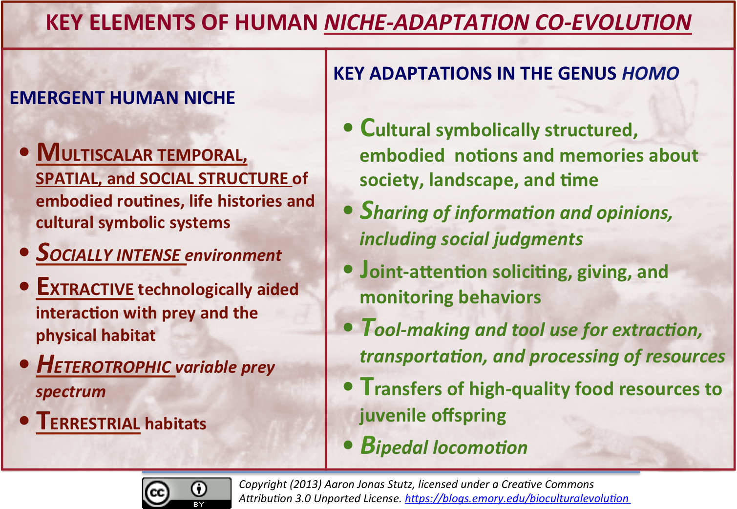The Human Niche – An Overview The Biocultural Evolution Blog