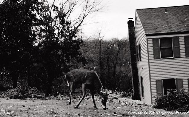 Oblivious Deer
