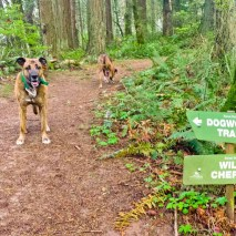Dogs on the trail in Forest Park Oregon