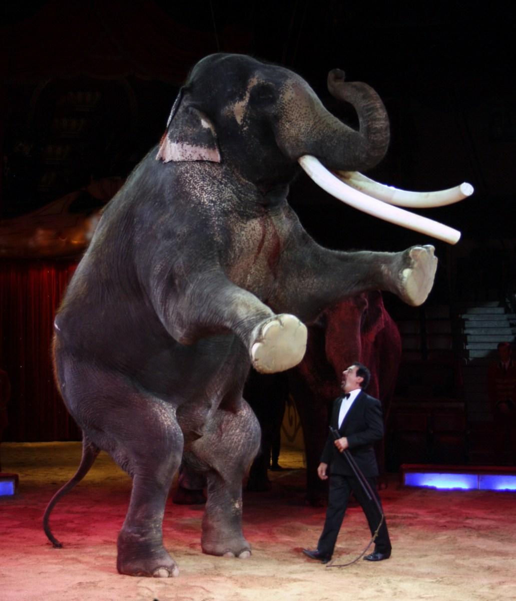 Uden elefanter dør magien. Uden magi intet cirkus.