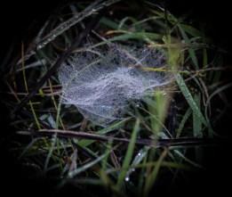 A web of diamonds