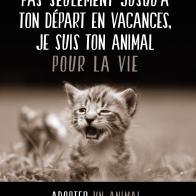 cause animale
