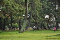 shonai park nagoya japao-5
