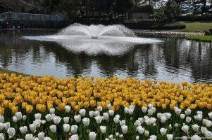 tulipas park kiso gifu japao-4