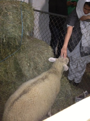 Customer pets a lamb at Al Madani.