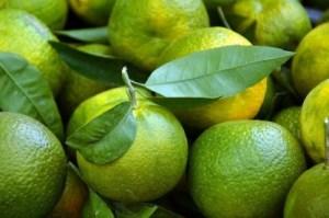 citruslimeta.jpg