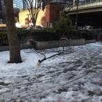 雪で折れた枝