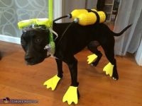 Black Lab Pet Halloween Costumes Pictures to Pin on ...