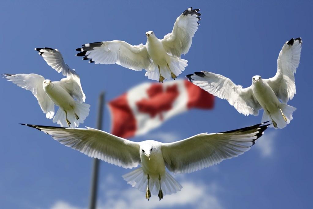 gulls, formation, flag