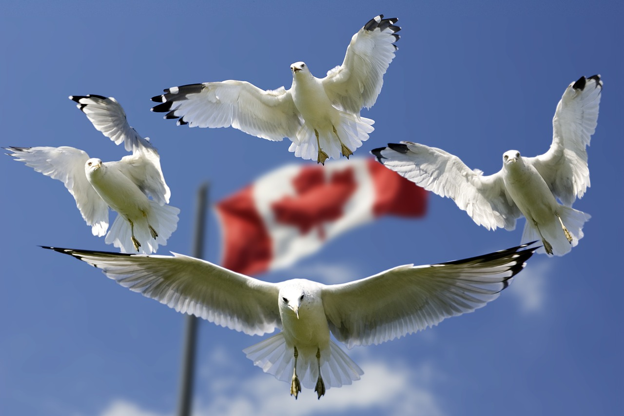 gulls, formation, flag