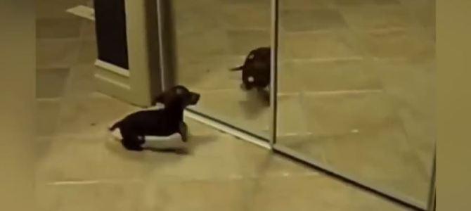 Tiere vor dem Spiegel