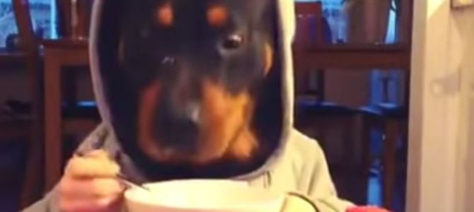 Hund beim Essen