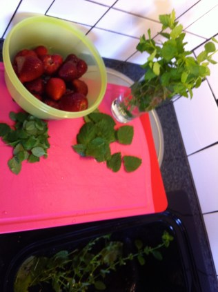 The beginning of something beautiful - freshly picked mint and self-picked and frozen strawberries.