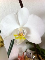 My orchid bloomed this winter. The process was astounding and amazing to watch; I'll have to record it next time.