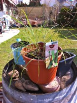 and Lemongrass - gotta keep this away from the cats...seems they love this stuff!