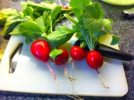 First harvest of the radishes (I started slicing before I remembered to snap a photo.)