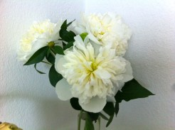 These elegant blooms elevate my boudoir, visually and olfactory, to the realm of royalty!