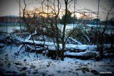 Toulouse-snow fall (21)