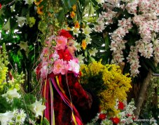 Mimosa Flower, Nice, France (6)