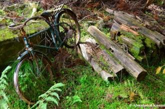 Abandoned Japanese Bike