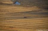 Harvest In North Korea, Rason, DPRK