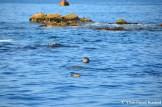 North Korean Seals