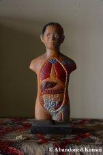 Cheap Anatomical Figure