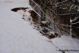 School Yard Landslide