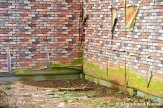 Brick Wallpaper Peeling Off