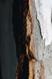 Hayswood Hospital Plaster Detail