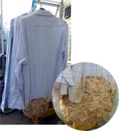 Bayer photo comp shirt