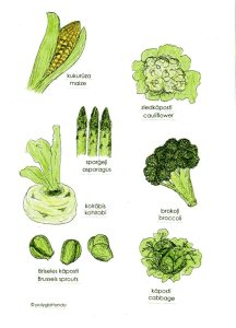 latvian veg 2