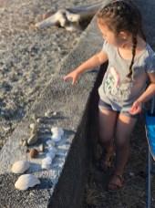 kid shell collection camano island 3