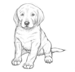 dogs drawing draw drawings dog pencil easy realistic puppy sketches sketch animals animal simple cool kid abbigli faces dibujos line