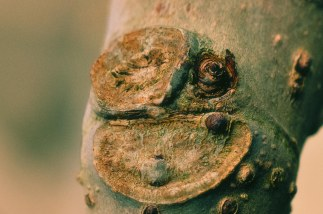 Funny Fig Fellas 2 Web-3